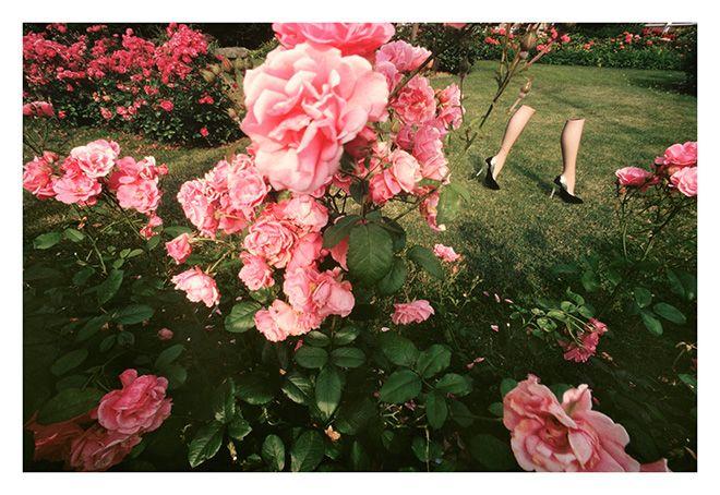 薔薇園の足
