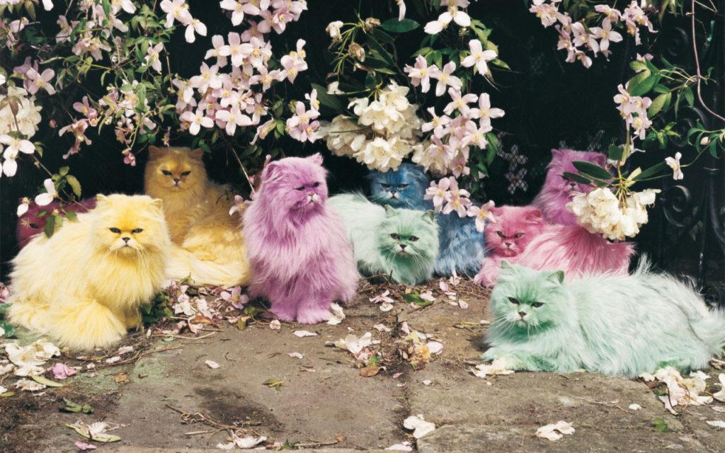 マカロン色の猫